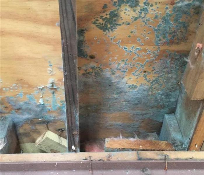 MOLD HELP IN PEMBERTON, MN Before